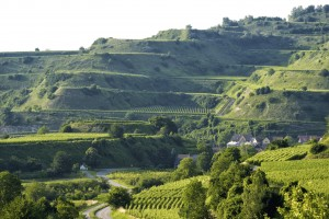 View at the terraced fields of Kaiserstuhl in Germany.